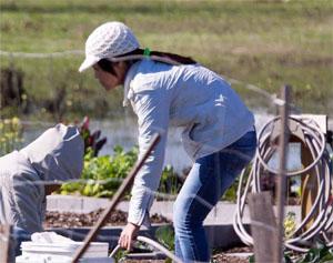 community garden growing